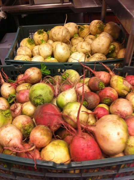 It's that time of year:  all the storage radishes (love beauty hearts!) and turnips from Nichols Farm
