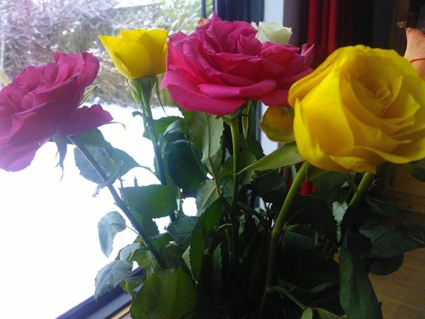 Gisteren kreeg ik trouwens bloemen van @oudstezoon en @jandeclioman die samen boodschappen hadden gedaan! #ziek