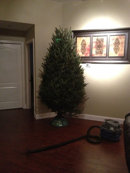 Got my tree! Now I have to wait for it to open up and decorate it! I bought all brand new decorations for it!!!!