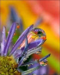 http://is.gd/Atyip7) And again some Beautiful Macro photographs #Superb ♉xy
