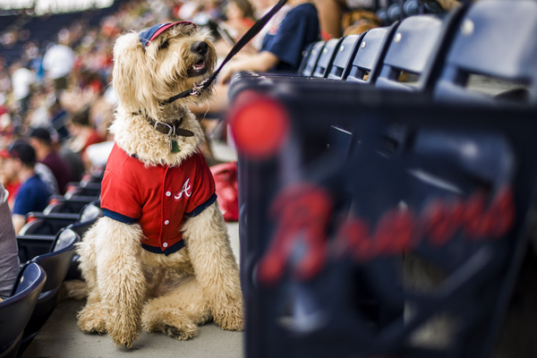 #BravesCountry & #DogLovers unite! Join us for a tail-waggin' good time at Bark in the Park on 9/16! Get tix today: braves.com/bark