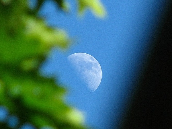 Daytime moon and oak 29/5/12 #moonwatch #wonders