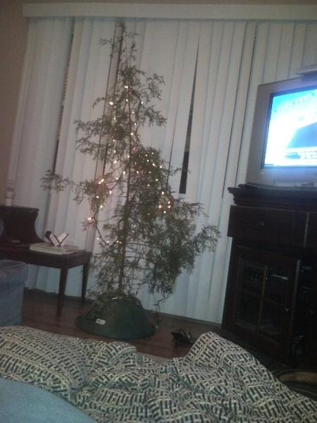 Congratulate, brilliant Ghetto red hot christmas tree agree