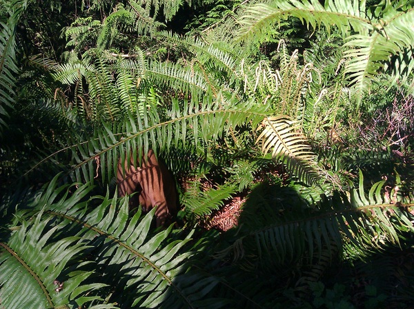 What you can't see here - ging and chester hunting in the ferns