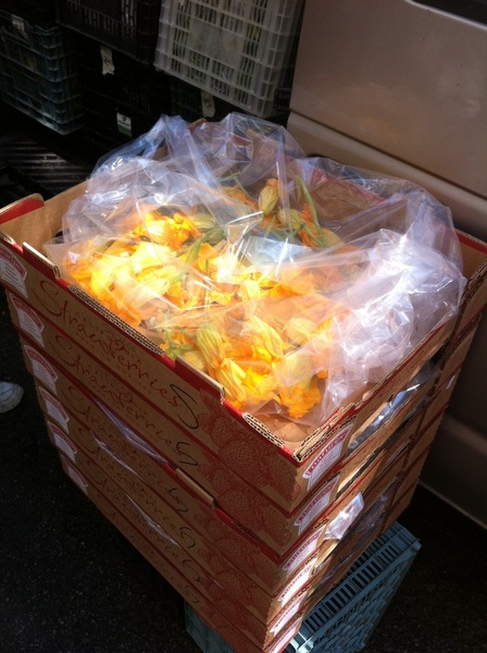 Our friends at Spence Farms are delivering 1500 of the most beautiful squash blossoms right now!