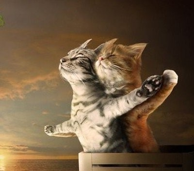 Cats on Titanic