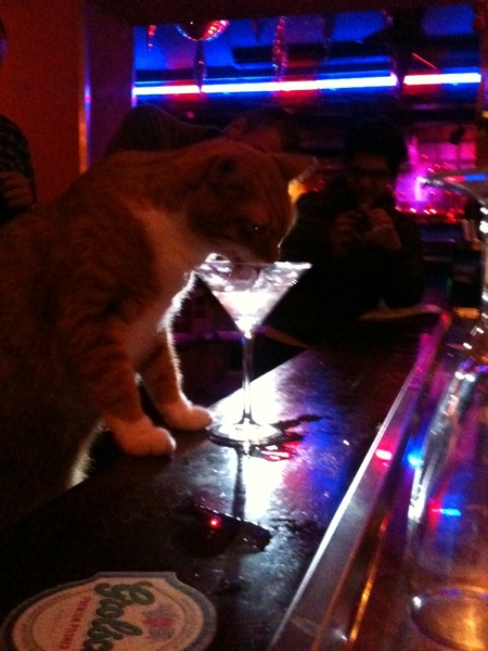 Can I haz drink pls? #kitteh prefers to drink from the bar
