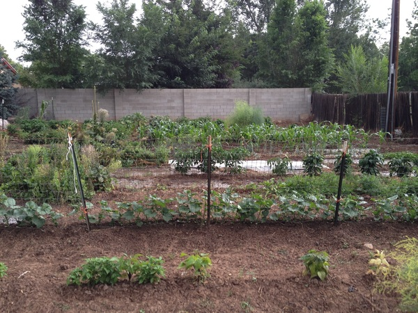 More #iOSDevCamp awesomeness and proof of @dom's theory of karma magick : I'm back irrigating my garden and it rains!