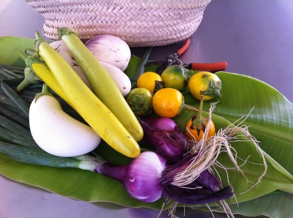 These are the ingredients harvested from Enrique Silva's Tamarindo Org Farm to cook w 2nite. Amazing eggplants!