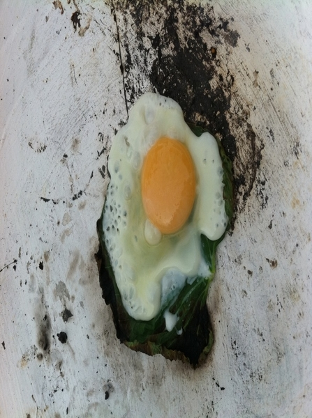 La Olla: one of my favorites: egg cooked on hoja Santa leaf on clay griddle; salsa of chicatanas (black ants)