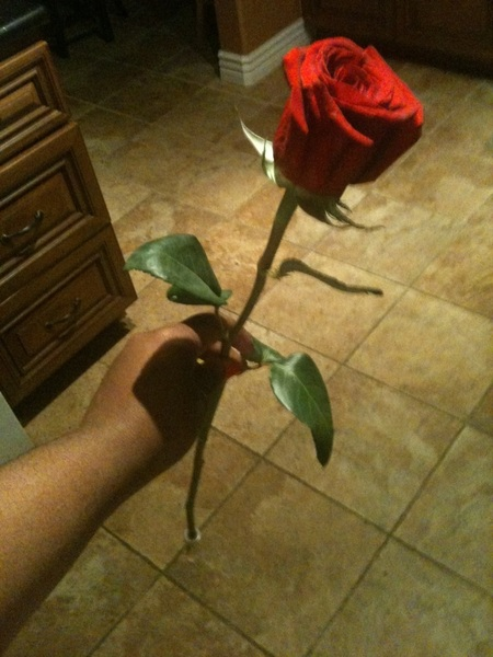 1 Long Stem Rose= 1Really Big Smile ... I like surprises now lol