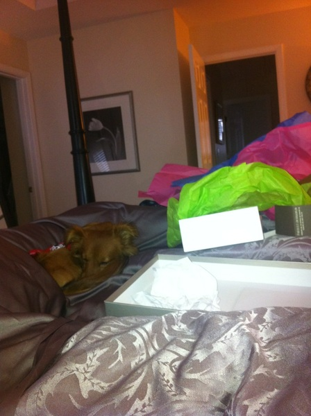 Louie and my mama knocked out...empty boxes gift wrapping tissue paper and all smh